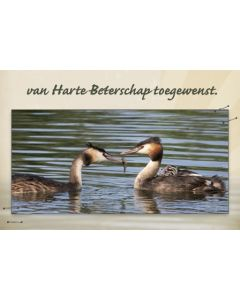 Beterschap heren 17